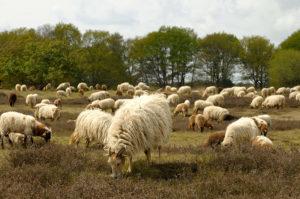 Natuurbegraafplaats in Zwolle
