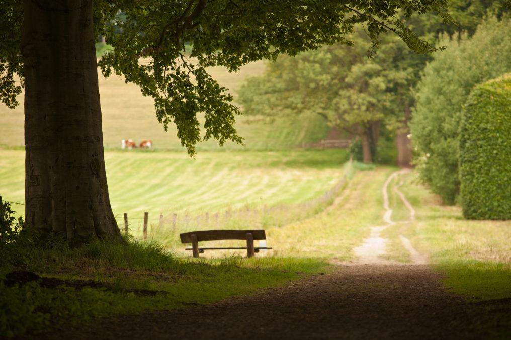 Begraven Op Natuurbegraafplaats Meppen In De Drentse Natuur